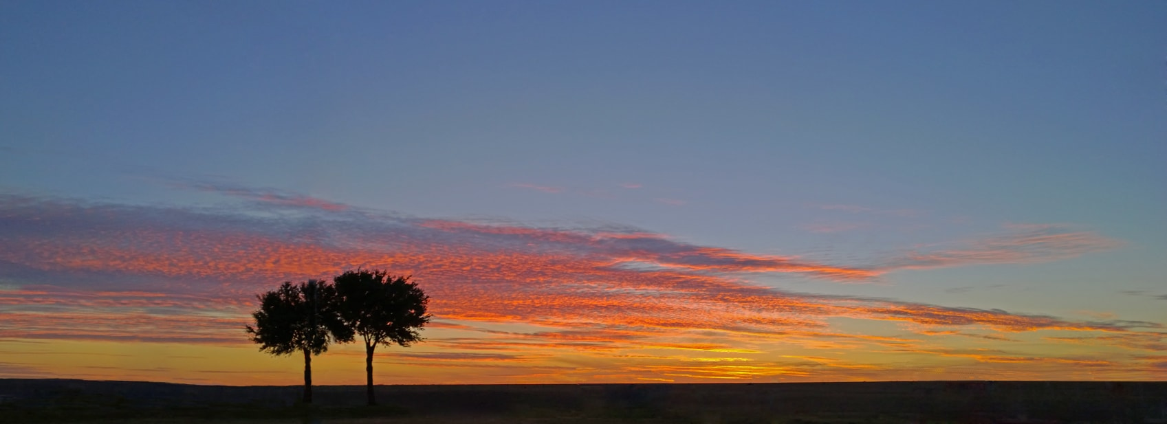 sunset-tree-airport-pano-2-min